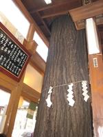 Matsubatchaya2