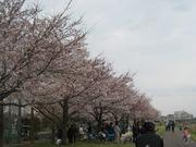 Tamagawacryakinikumura